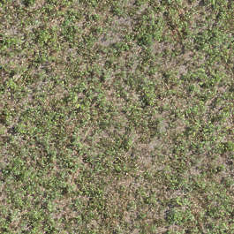 aerial ground terrain grass groundplants plants cover groundcover
