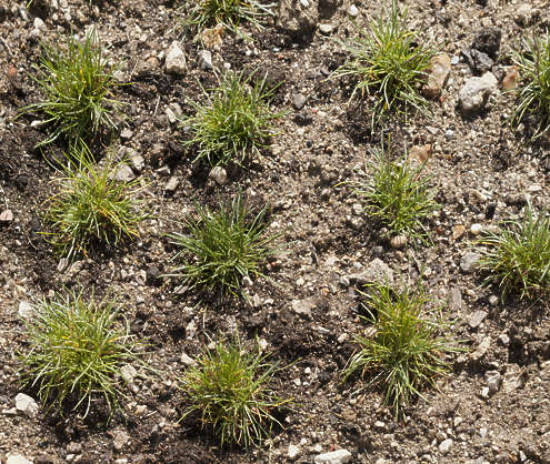 ground grass clump clumps earth rough