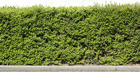 Hedges Shrub Texture Background Images Pictures
