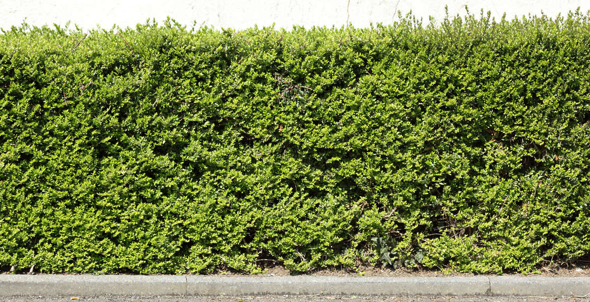 Hedges0054 Free Background Texture Hedge Leaves Green