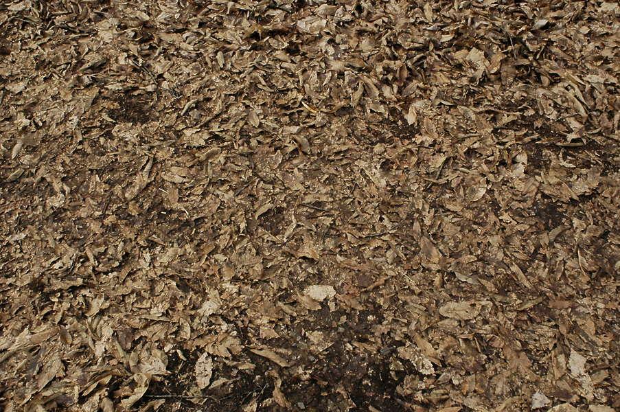 Leavesdead0003 Free Background Texture Dead Leaves