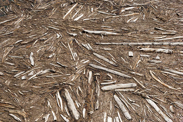 drift wood driftwood logs log water floating dam sticks ground