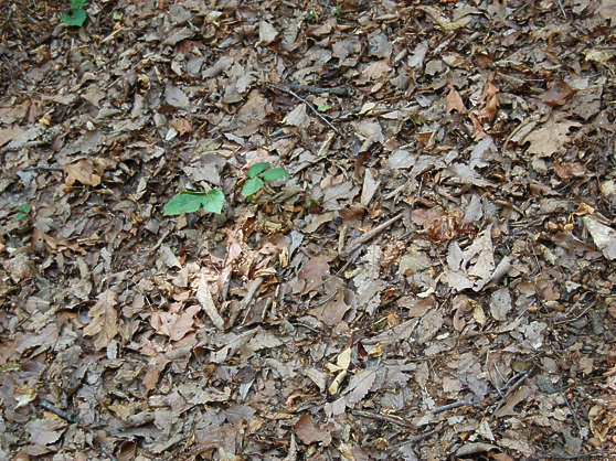 leaves brown dead floor ground forest