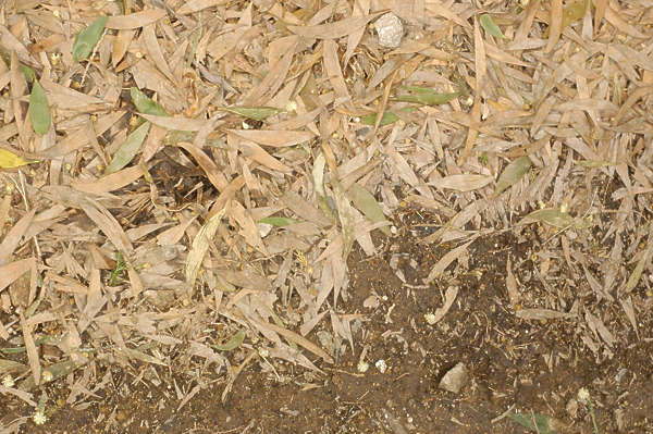 leaves floor ground dry dead edge border sand