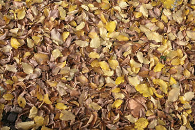 leaves floor ground dead autumn