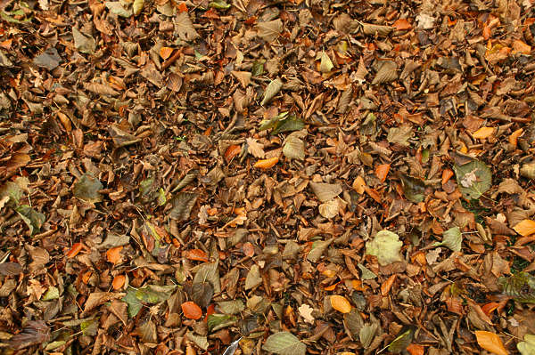 leaves forest floor leaf ground