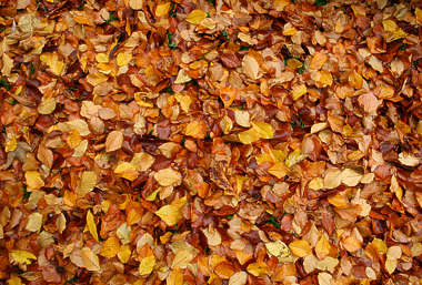 leaves floor ground forest autumn