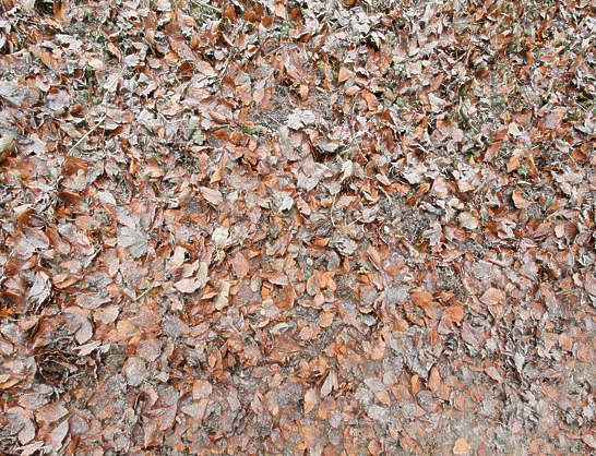 leaves floor forest frozen winter
