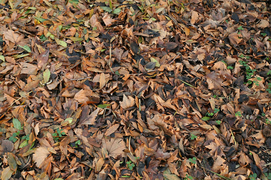LeavesDead0044 - Free Background Texture - leaves forest ... Dark Forest Floor Texture