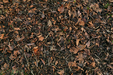 leaves forest floor leaf ground old dead
