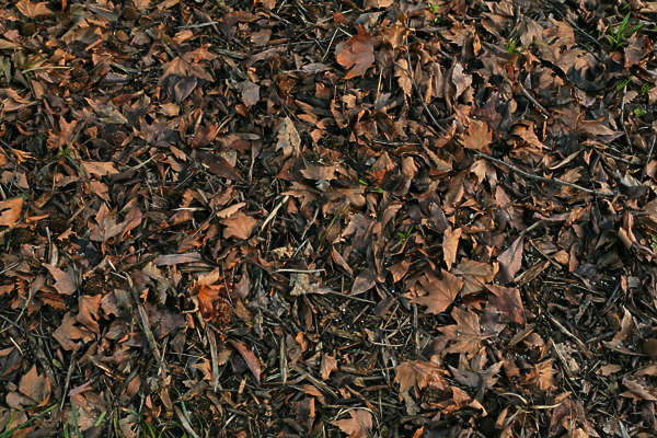 LeavesDead0045 - Free Background Texture - leaves forest ... Dark Forest Floor Texture