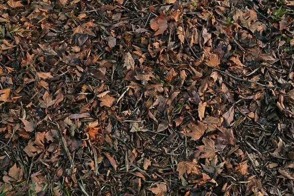 Dark Forest Ground Textures Related Keywords - Dark Forest ... Dark Forest Floor Texture