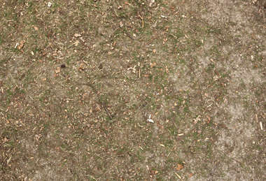 forest floor ground sand grass short dry