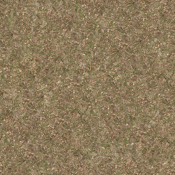 LeavesDead0052 Free Background Texture forest floor ground sand grass short dry green brown