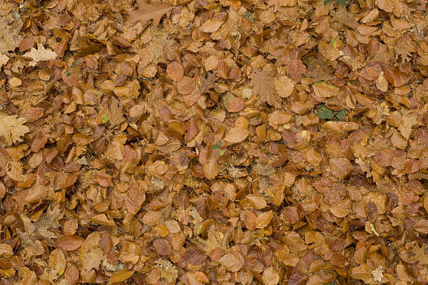 leaves floor forest ground autumn