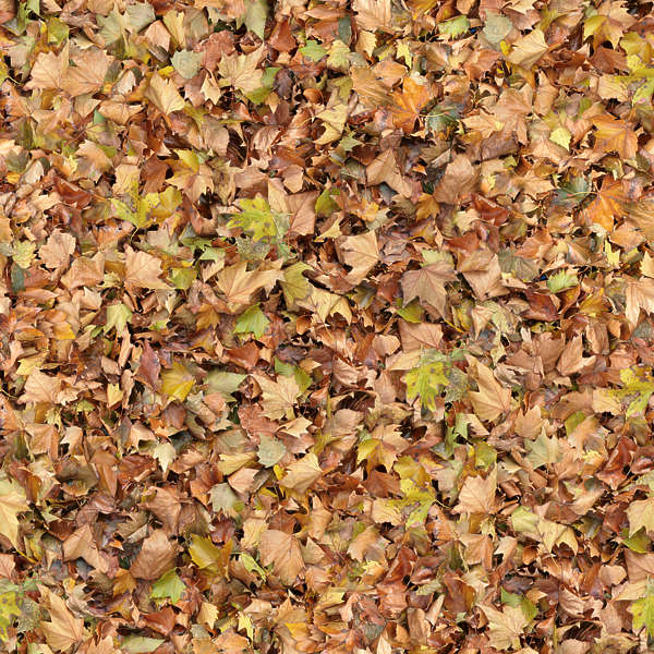 Leavesdead0019 Free Background Texture Leaves Floor