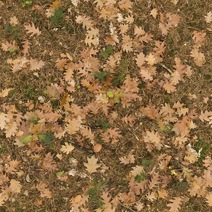 leaves forest floor leaf ground oak autumn