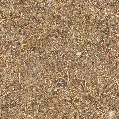 Leavesdead0065 Free Background Texture Forest Floor