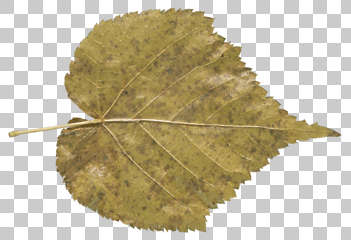 Masked Leaf Texture Background Images Pictures Textures.com is a website that offers digital pictures of all sorts of materials. masked leaf texture background images