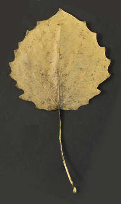 leaf masked alpha isolated