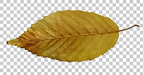 leaf leaves autumn isolated masked