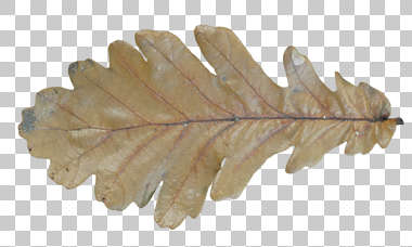 leaves closeup isolated masked