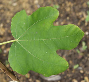 leaves closeup