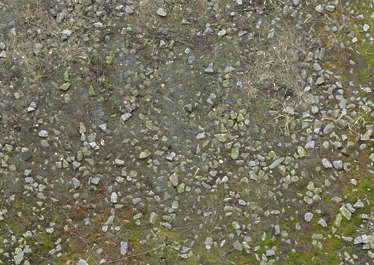 ground mossy stones gravel