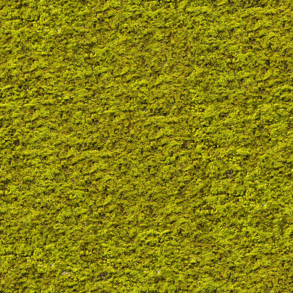 moss0073 - free background texture