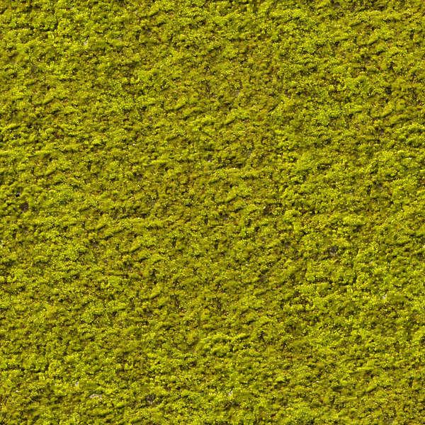 Moss0073 Free Background Texture Moss Green Seamless