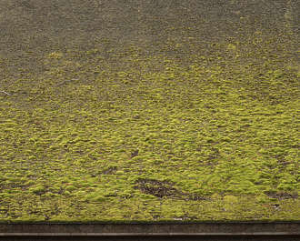 moss mossy wall japan