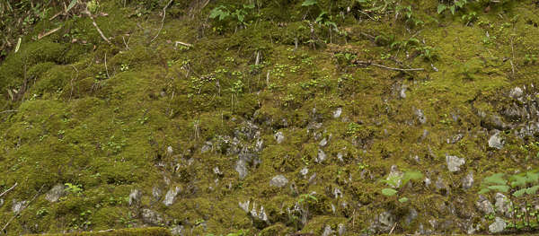 moss mossy wall japan overgrown boulders