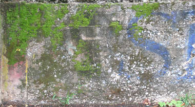 wall moss concrete