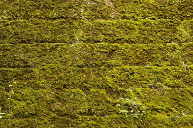 moss bricks old medieval