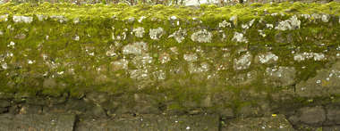 brick medieval moss wall