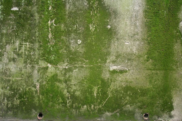 moss concrete wall dirty