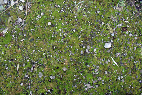 moss mossy ground pebbles