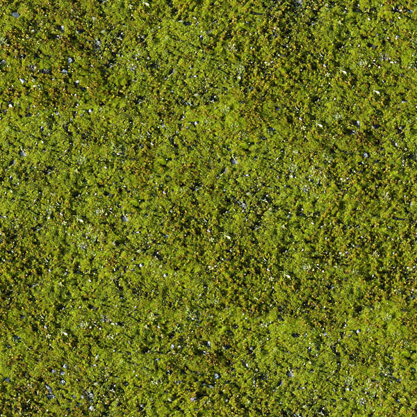 Moss0002 Free Background Texture Moss Green Saturated
