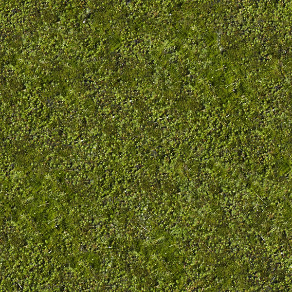 Moss0010 Free Background Texture Moss Green Seamless