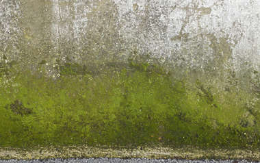 moss mossy plaster gradient dirty