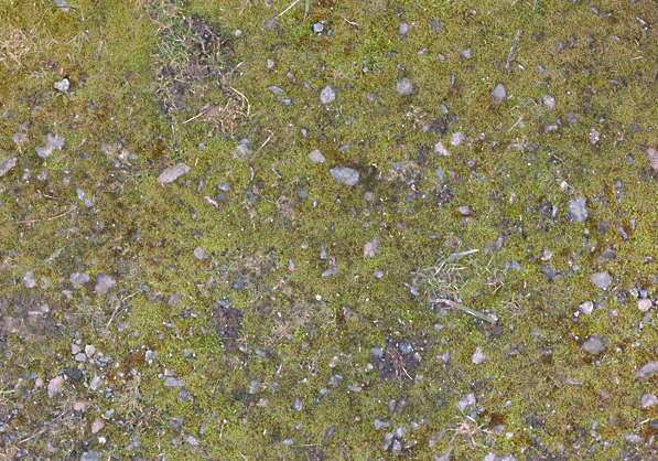moss mossy grass pebbles stones soil