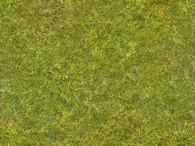 Moss0107 Free Background Texture Ground Moss Green