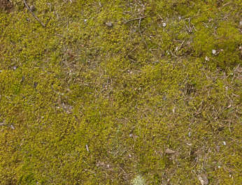 earth ground mossy moss