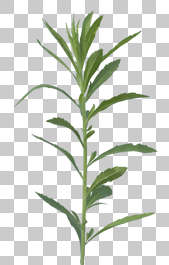 plant transparent weed masked isolated alpha