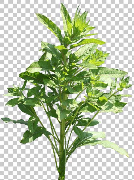 natureplants0004 - free background texture