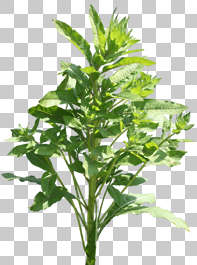 plant masked foliage isolated alpha