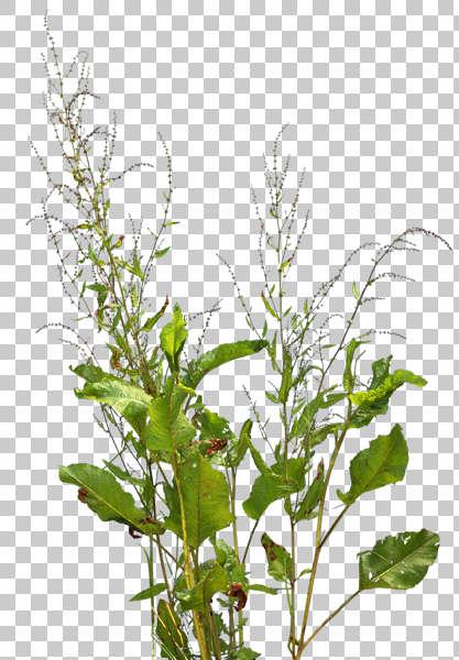 Natureplants0006 Free Background Texture Plant Masked