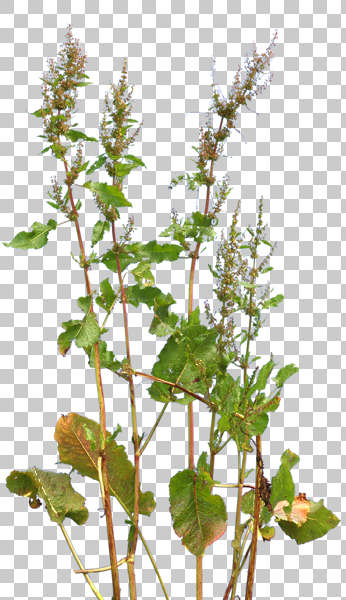 Natureplants0036 Free Background Texture Plant Masked