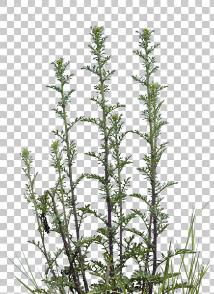 Natureplants0038 Free Background Texture Plant Masked