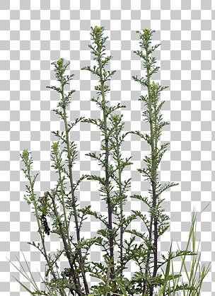 Natureplants0038 Free Background Texture Plant Masked